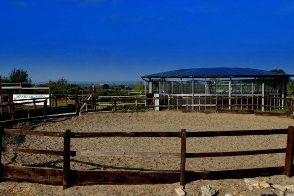 Lunging Arena and Horse Walker